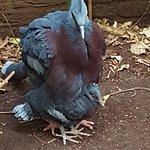 Photo of Vogelpark Avifauna