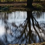 On reflection....Hyde Hall grounds