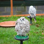 Bird of Prey Centre.
