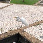 Foto di Mangal das Garcas