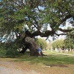 A witness tree...