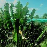 Beautiful Las Palmas foliage everywhere you look!