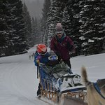 8 year old driving the dog sled; adult riding :-)
