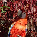 One of the parrots in the garden
