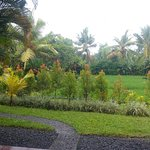 View of the garden and rice field from our ground floor bungalow.