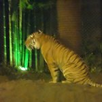 Photo of Chiang Mai Night Safari