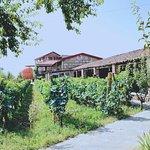 Qvevri and Qvevri Wine Museum