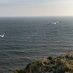 RSPB Bempton Cliffs Foto