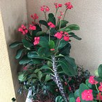 These are beautiful plants and gardens here at Laquita. On the sign they welcome groups that are