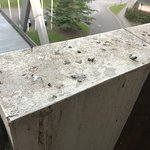 Pigeon poo all over balcony
