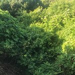 One of our views oceanfront balcony (jungle overgrown) plug in ant / bug to scare bugs from our