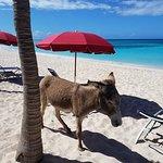 Valokuva: Bohio Dive Resort