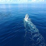 Foto de Fish Drake Bay - Reel Escape