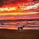 A Dog at Sunset