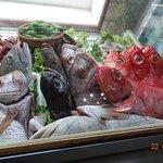 Fish in the vitrine