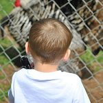 Φωτογραφία: Chestatee Wildlife Preserve & Zoo