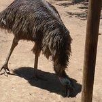 Photo of Safari Ostrich Show Farm