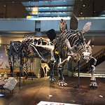 Foto de Natural History Museum of Los Angeles County