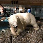 Photo of Svalbard Museum
