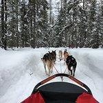 Billede af Chilly Dogs Sled Dog Trips