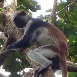Photo de Jozani Chwaka Bay National Park