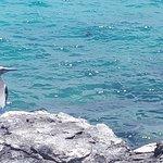 Φωτογραφία: Puerto Chino Beach