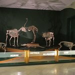 Photo of National Museum of Natural History