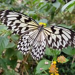 Photo of Palawan Butterfly Ecological Garden and Tribal Village