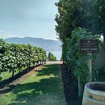 Gorgeous view of the vines by the lake. Can't beat it!