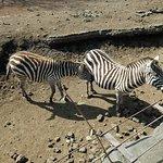 Photo of Izu Animal Kingdom