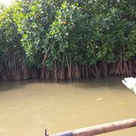 Pichavaram Mangrove Forest View