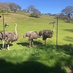 Foto de Safari West