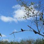 Photo of Rancho Primicias