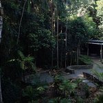 Photo of Mary Cairncross Scenic Reserve