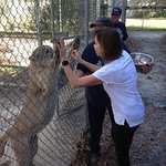 Feeding panther and giving a high five