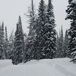 Winter scene from the area - snowmobiling trip!