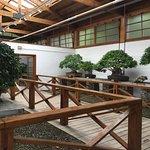 Photo de Museo del Bonsai