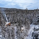 Photo of Montmorency Forest