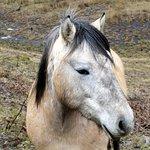 Friendly highland pony!