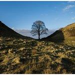 Sycamore Gap (Robin Hood Tree)