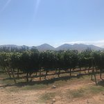 Santa Rita Vineyard in Maipo Valley