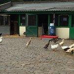 ภาพถ่ายของ Hackney City Farm