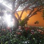 Foto de El Jardín de las Delicias