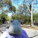 Another hippo. Pat! Notice how clean the grounds are.