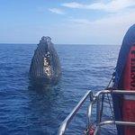 Foto de Captain Dan McSweeney's Whale Watching Adventures