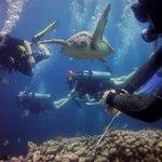 Oceans 5 Dive Gili Air Foto