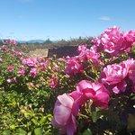 Billede af National Rose Garden