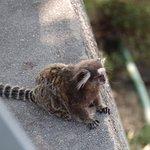 Wildlife on the Sugarloaf