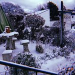 Beautiful snowfall in the garden