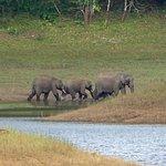 Photo of Periyar Wildlife Sanctuary